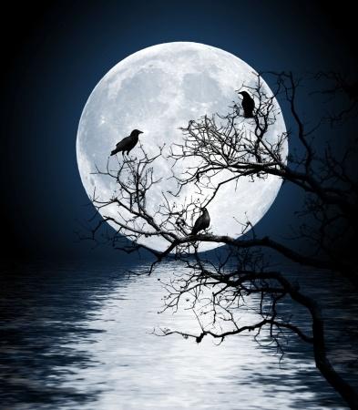 Zen Kernels, Insights for Traders: Raven Moon