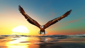 Wild Wisdom, Insights for Traders: Eagle Eyes
